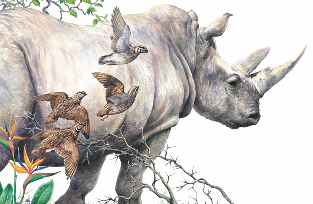 Illustration of a rhino