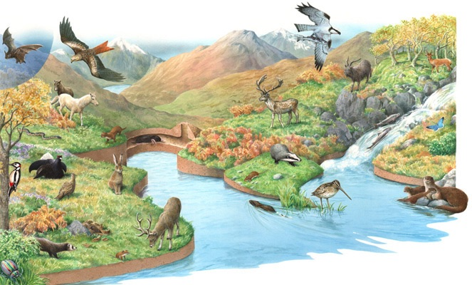 Illustration of Welsh mountain wildlife