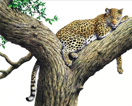 Illustration of a leopard