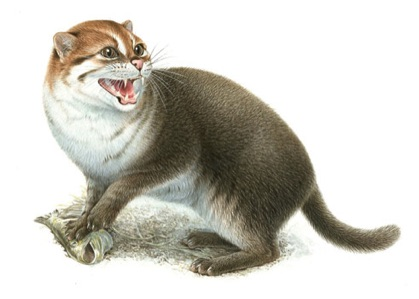 Illustration of a wild cat